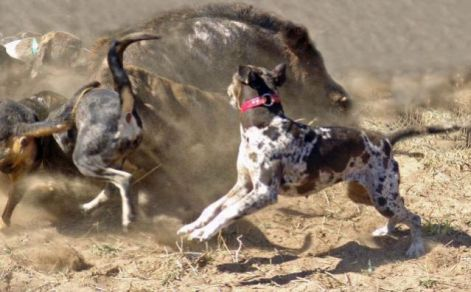 Aggressive Dog Training Red Deer